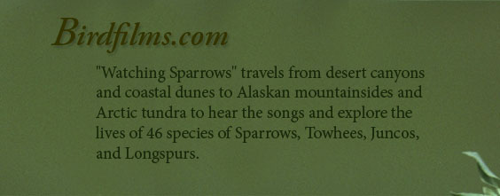 Sparrow header - Explore the lives of 46 species of Sparrows, towhees, Juncos and Longspurs.