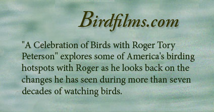 """A Celebration of Birds with Roger Tory Peterson"" explores some of America's birding hotspots with Roger as he looks back on the changes he has seen during more than seven decades of watching birds. ""A Celebration of Birds with Roger Tory Peterson"" explores some of America's birding hotspots with Roger as he looks back on the changes he has seen during more than seven decades of watching birds."